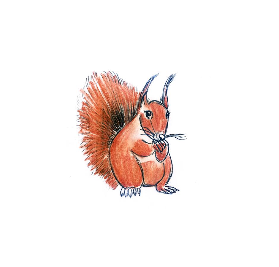 Kinderbuchillustration Eichhörnchen