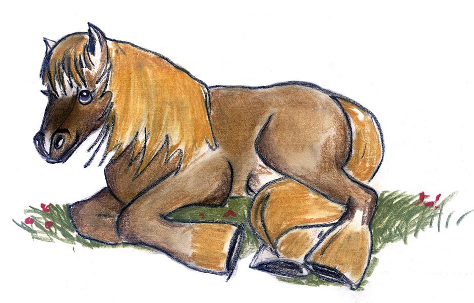 Kinderbuchillustration Pony